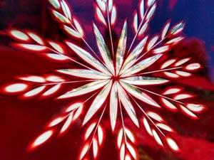 gravure sur carreau de verre rouge